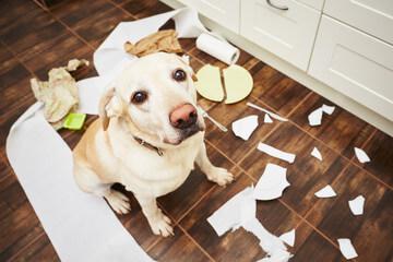 Når hunden har lavet ulykker